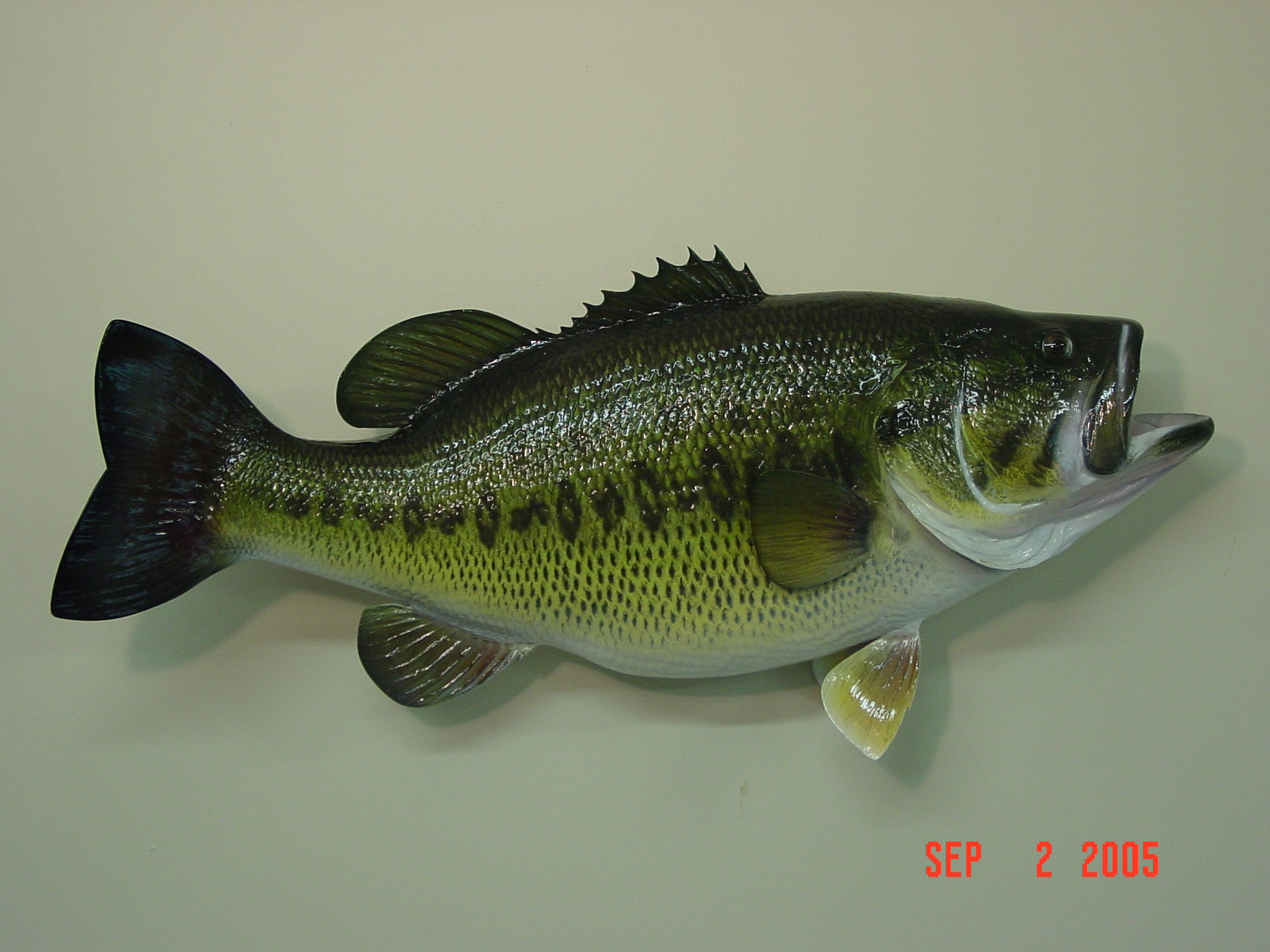 the large mouth bass